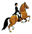dressage rider vector image