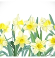 Lush yellow narcissus seamless background vector image vector image