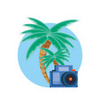 palms trees with photographic camera vector image vector image