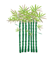 A Beautiful Isometric of Green Bamboo Plants vector image