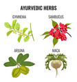 ayurvedic herbs set isolated on white gymnema vector image