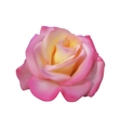 Pink delicate Rose vector image vector image