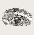 engraved vintage eye vector image vector image