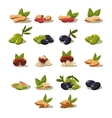 Olives and Nuts Modern Design vector image vector image