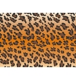 Background leopard skin vector image vector image