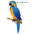blue and gold macaw bird vector image vector image
