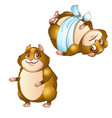 healthy and diseased hamster isolated on a white vector image vector image