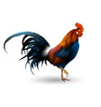 rooster isolated realistic style vector image