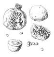 set fruits lemon garnet kiwi vector image vector image