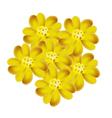 Yellow Yarrow Flowers or Achillea Millefolium Flow vector image vector image