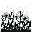 field dandelion flowers black silhouettes vector image vector image