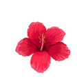 hibiscus tropical flower vector image