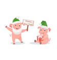 new year pigs with gift box and greeting signboard vector image vector image