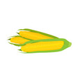 young fresh corn on the cob on white background vector image