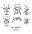 bugs ans beetles isolated on white vector image vector image