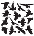 Crow Silhouette set 01 vector image vector image
