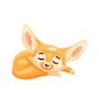 sleeping cartoon fennec fox cute kawaii character vector image vector image