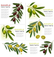 green and black olives vector image vector image