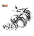 hand drawn peach branch vector image vector image