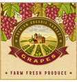 Vintage colorful grapes harvest label vector image vector image