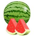 watermellon vector image vector image