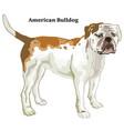 colored decorative standing portrait american vector image vector image