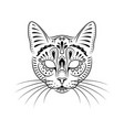 decorative cat portrait on white with whiskers vector image vector image