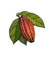 Hand drawn ripe cacao fruit hanging on a branch vector image vector image