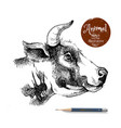 hand drawn sketch cow profile head isolated vector image vector image