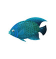 predatory blue-colored fish with big fins side vector image
