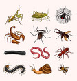 big set insects vintage pets in house bugs vector image vector image