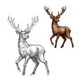 deer reindeer or elk sketch of wild mammal animal vector image vector image