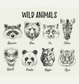 hand drawn sketch animal heads set isolated cute vector image