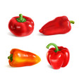 set sweet paprika bell and cherry peppers vector image vector image