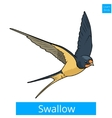 Swallow learn birds educational game vector image vector image