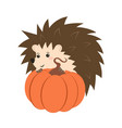 hedgehog with pumpkin vector image