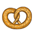 pretzel on white background vector image
