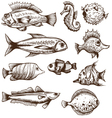 Set of fishes isolated on a white backgrounds vector image vector image