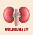world kidney day poster or banner vector image