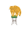 bright orange tabcat with green eyes standing vector image vector image