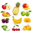 Fresh fruit vector | Price: 3 Credits (USD $3)