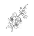 hand drawn branch sakura with blooms flowers vector image vector image