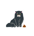 black long haired cat sitting near brown poop vector image