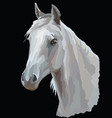 colored horse portrait-3 vector image vector image