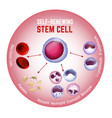 self-renewing stem cell vector image vector image