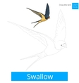 swallow bird learn to draw vector image vector image
