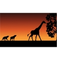 Silhouette of panther and giraffe vector image vector image