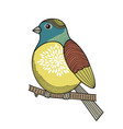 colorful bird on the branch vector image vector image