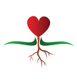 Growing heart vector image vector image