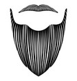 isolated detailed beard vector image